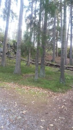 Skogen är en bra träningsplats för barn